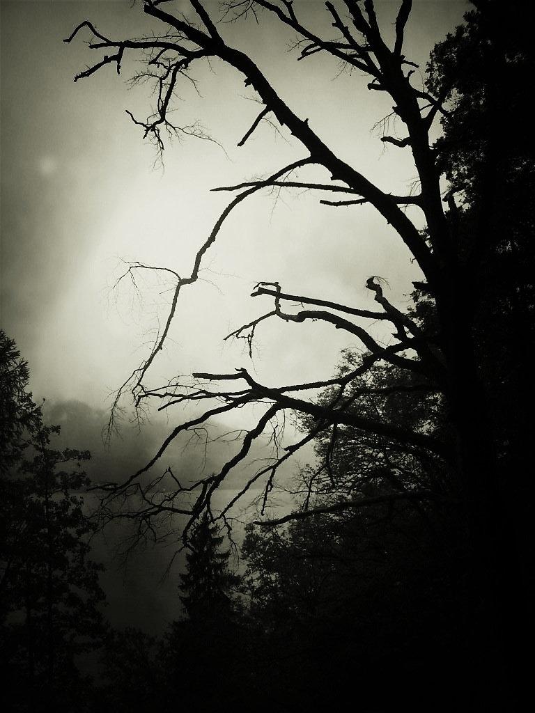 bkg-noxart-black-wood.jpg